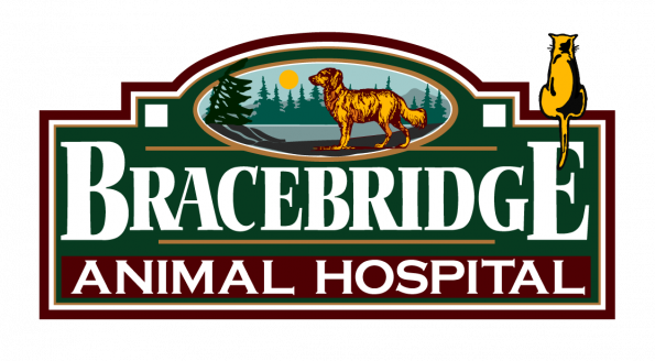 Veterinarians Bracebridge Ontario | Bracebridge Animal Hospital
